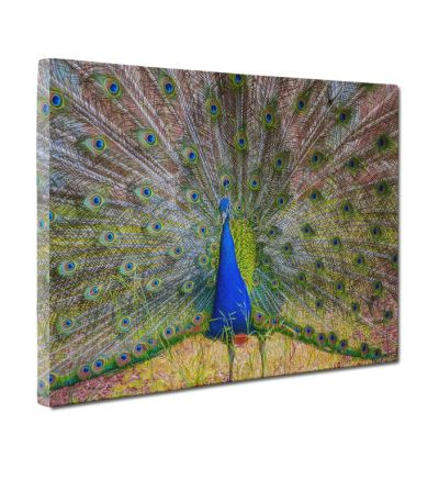 Single Image - Image Wrap Border Canvas Print And Stretch