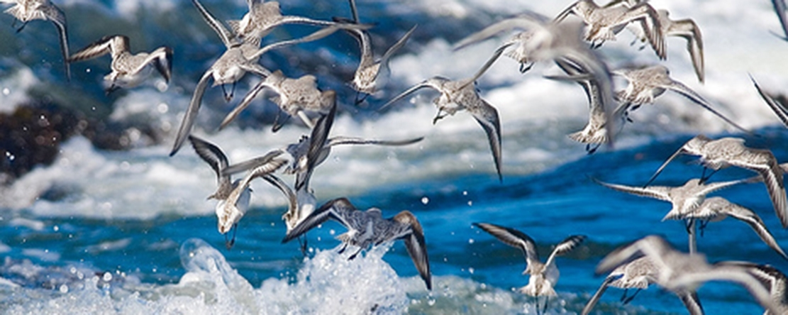 Tip of the Week - Take Outstanding Wildlife Photographs